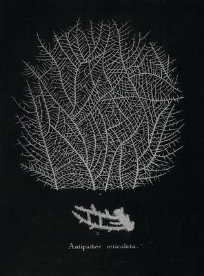 STNO-B001-01