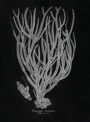 STNO-B001-04