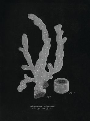 STNO-B001-06